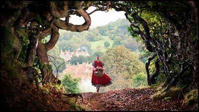 به سوی جنگل