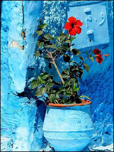 آبی و قرمزهای بهاری